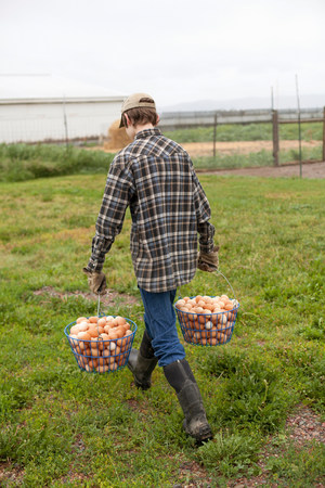durable: Boy carrying two baskets of eggs