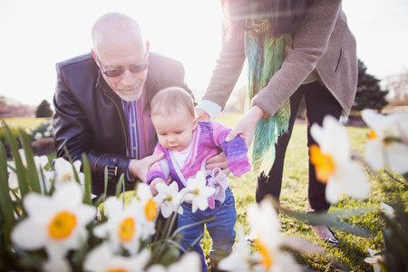 Grandparents with granddaughter amongst daffodils LANG_EVOIMAGES