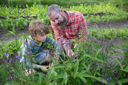 relaciones laborales: Maduro, hombre, hijo, descubrimiento, plantas, hierba, granja