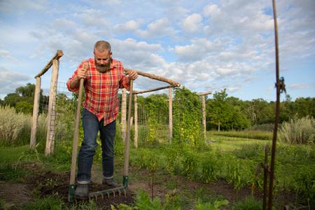 self sufficient: Mature man raking soil on herb farm