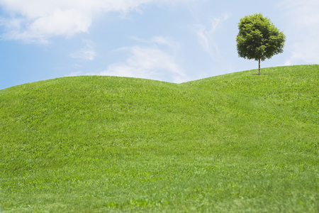 Digitally generated image of grassy hills and tree LANG_EVOIMAGES