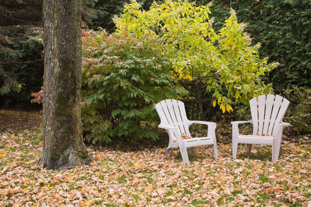 chillout: Two chairs in front of tree in autumn