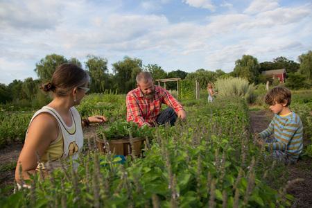 relaciones laborales: Familia, trabajando, juntos, hierba, granja LANG_EVOIMAGES