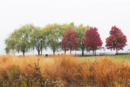 concealment: Autumn trees in mist,Bear Island,New York State,USA