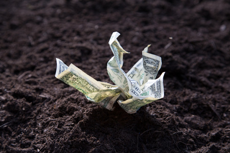 Dollar bills growing out of soil LANG_EVOIMAGES