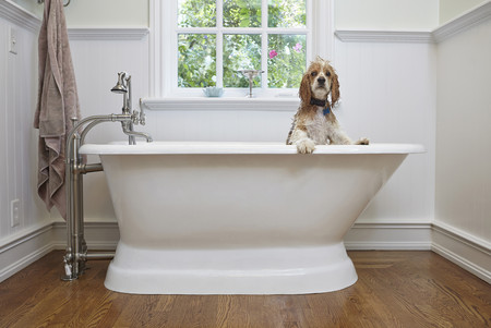 pooches: Puppy inside bathtub LANG_EVOIMAGES