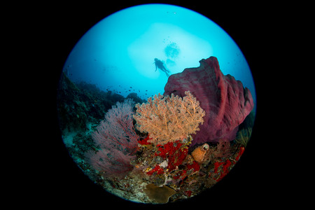 Coral reef scene with dive LANG_EVOIMAGES