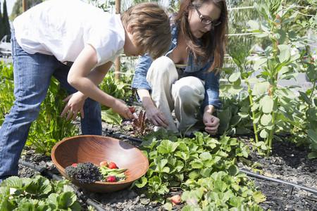 relaciones laborales: Madre, hijo, Cosecha, fresas, jardín
