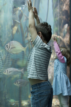 Young brother and sister looking at tropical fish in aquarium LANG_EVOIMAGES