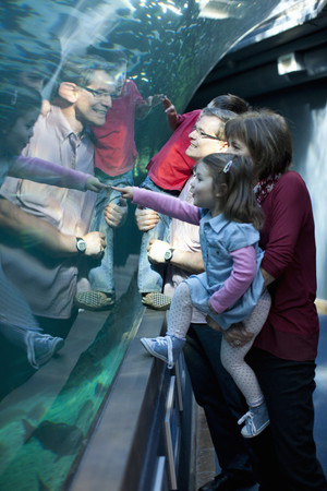Grandchildren and grandparents looking at fish in aquarium