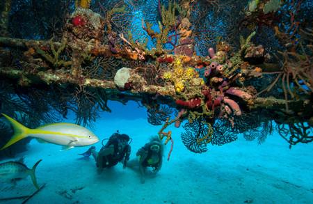 gorgonian sea fan: Scuba divers on shipwreck