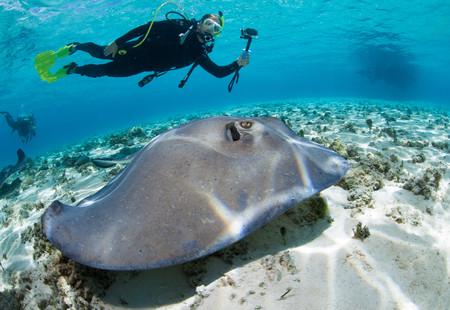 stingrays: Diver observes stingray LANG_EVOIMAGES