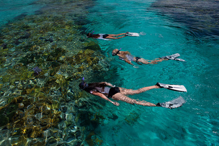 snorkelers: Snorkelers above a coral reef