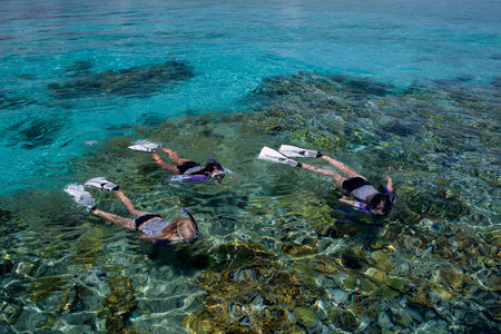 Snorkelers above a coral reef