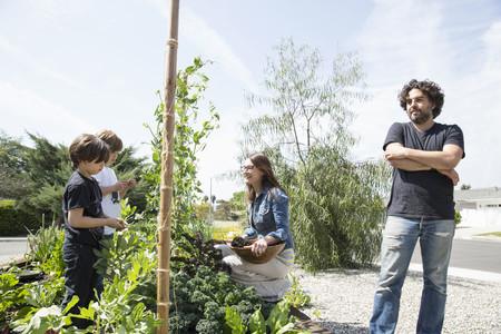 relaciones laborales: Familia con dos niños recogiendo guisantes en el jardín