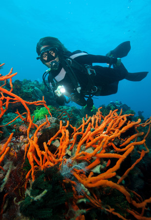 hard coral: Scuba diver on coral reef