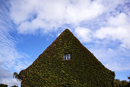 housing lot: House gable overgrown with ivy LANG_EVOIMAGES