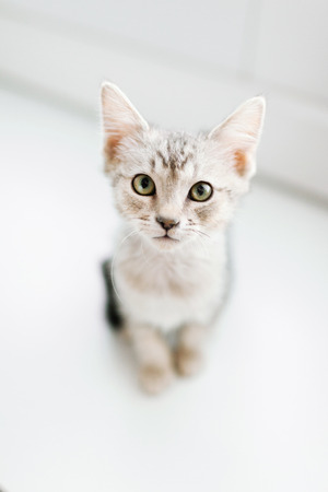 Overhead view of tabby kitten on floor LANG_EVOIMAGES