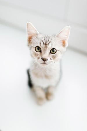 Overhead view of tabby kitten on floor LANG_EVOIMAGES