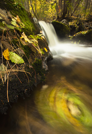 gully: Birch and alder leaves swirling in river, Okanagan Valley, Naramata, British Columbia, Canada LANG_EVOIMAGES