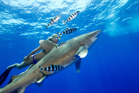oceanic: Snorkeler and Oceanic whitetip LANG_EVOIMAGES