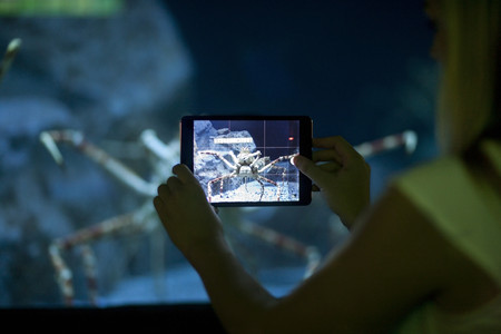 fishtank: Young woman photographing spider crab on digital tablet in aquarium