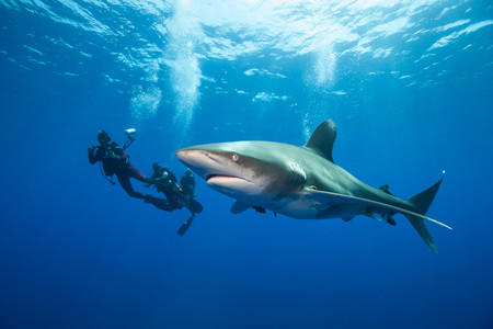 oceanic: Divers and Oceanic whitetip