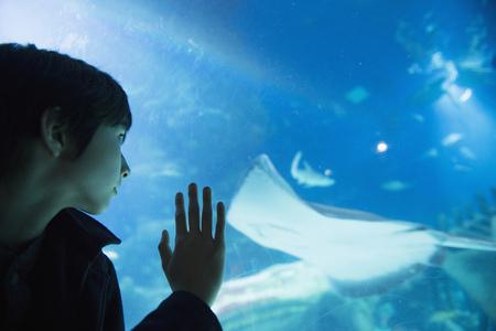 admired: Boy admiring sea life in aquarium