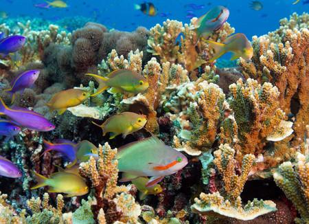 purples: Colorful reef scene