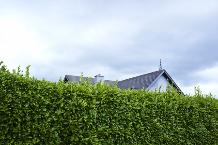 inaccessible: Tall green boundary hedge with house behind