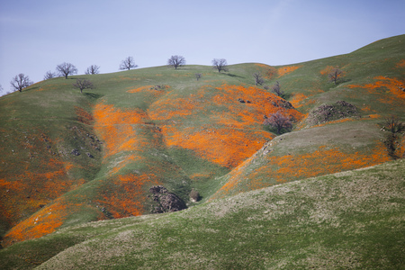 Undulating hillside, California, USA