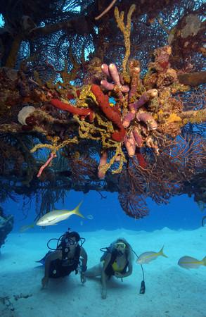 Scuba divers on shipwreck