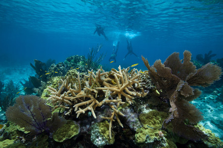 snorkelers: Snorkelers on a coral reef LANG_EVOIMAGES