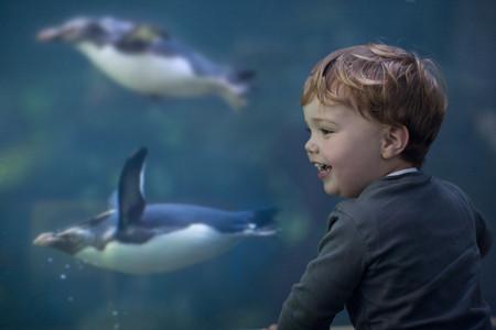 Young boy enjoying penguins swimming in aquarium LANG_EVOIMAGES