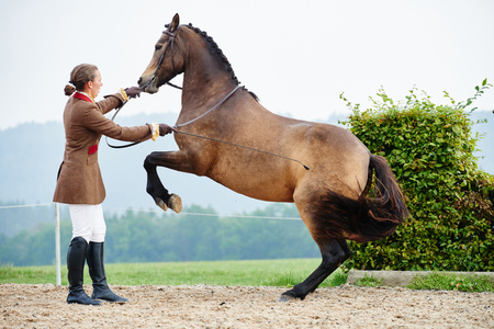 Female rider training dressage horse on hind legs in equestrian arena LANG_EVOIMAGES