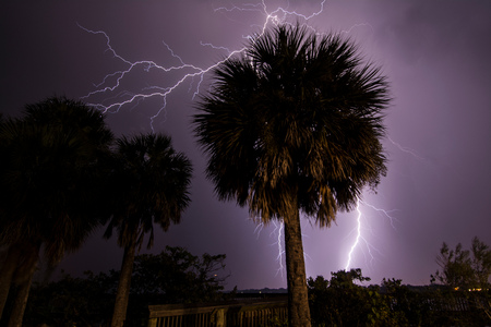 Lightning strikes behind palm trees at Merritt Island,viewed from the State Road 520 Causeway bridge crossing Indian River Lagoon,Florida