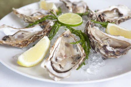lemon wedge: Close up of oysters on half shell LANG_EVOIMAGES