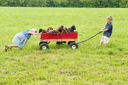 Kids pulling puppies in a wagon LANG_EVOIMAGES