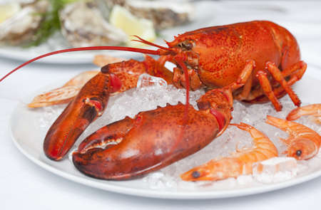 tempted: Close up of plate of lobster LANG_EVOIMAGES