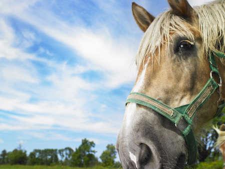 Horse  LANG_EVOIMAGES