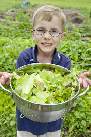 Young boy collecting lettuce from garden