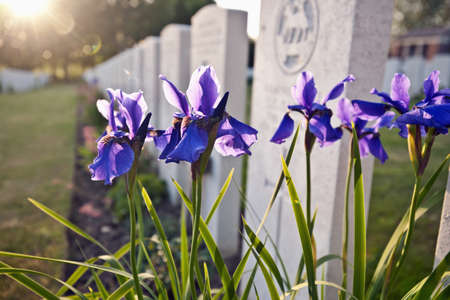 purples: Close up of flowers growing on grave