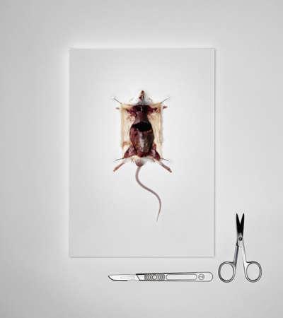 istruzione: Mouse morto preparato per la dissezione LANG_EVOIMAGES