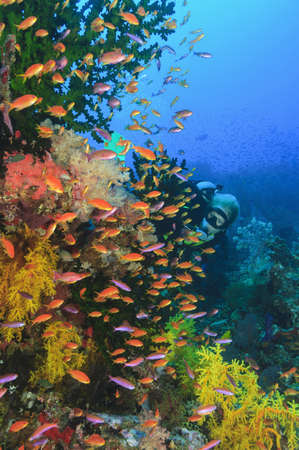 Colorful fish swimming in coral reef