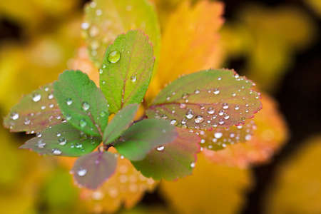Close up of water droplets on leaves LANG_EVOIMAGES