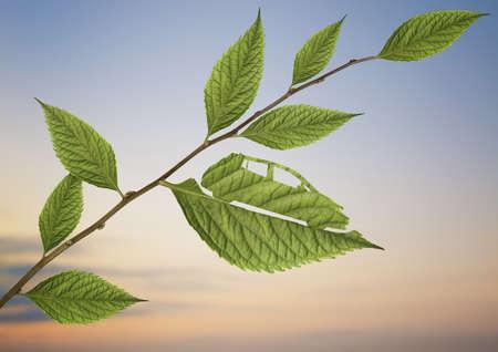 Car shape cut in green leaf LANG_EVOIMAGES