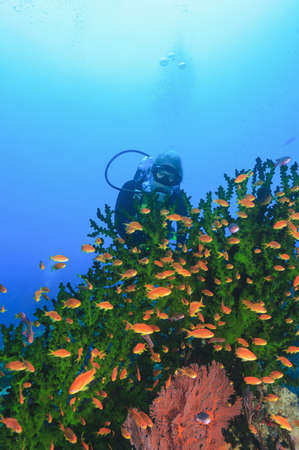 Diver admiring fish in coral reef LANG_EVOIMAGES