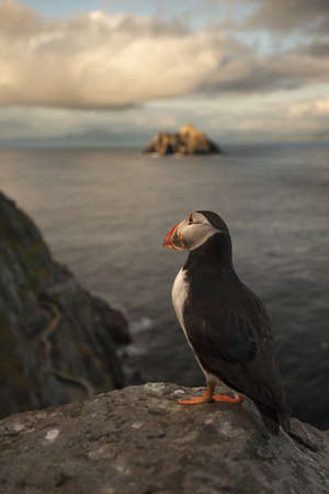 Puffin roosting on cliffs LANG_EVOIMAGES