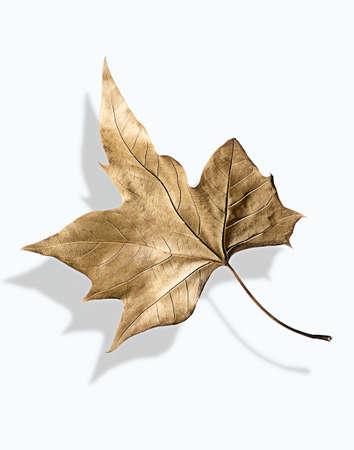 Close up of leaf casting shadow LANG_EVOIMAGES