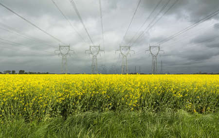 remoteness: Power lines over field of flowers LANG_EVOIMAGES